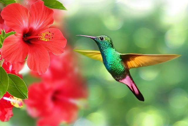 У колибри обнаружили скрытый от других птиц