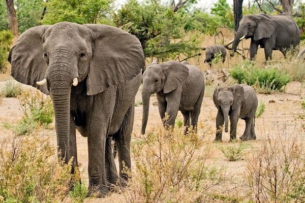 Туристы в Африке оказались в компании слонов
