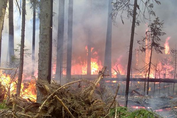 Население Эвенкии задыхается от дыма лесных пожаров