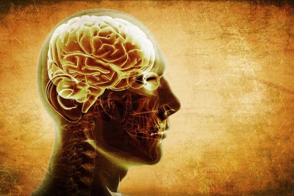 Открывая секреты мозга