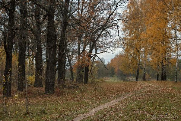 Жители Нижнего Новгорода очистят отмусора Копосовскую дубраву