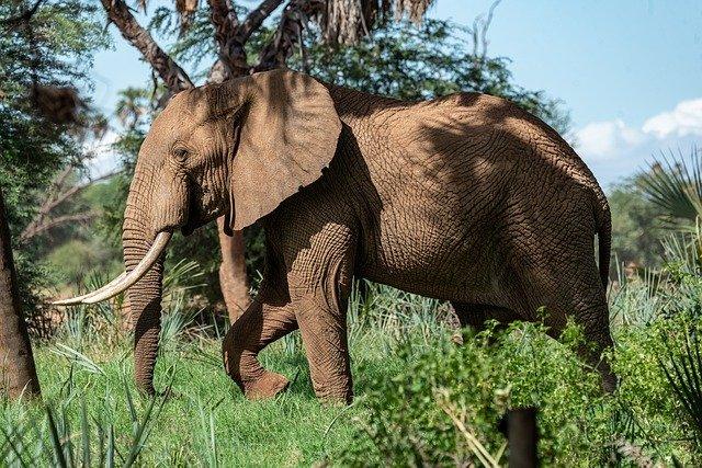 Биологи назвали причину массовой гибели слонов в Ботсване