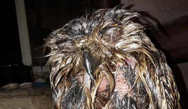 Челябинские зоозащитники спасли сову