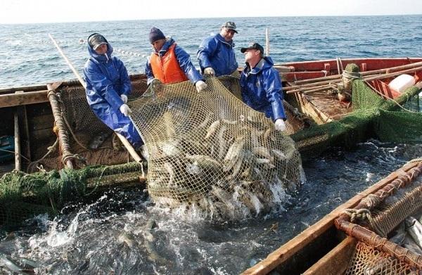 Живой объект из Охотского моря за полгода не смогли идентифицировать
