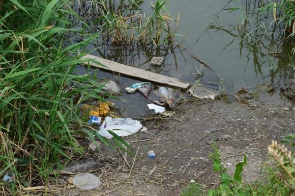 В городском пруду Белгорода всплыла рыба