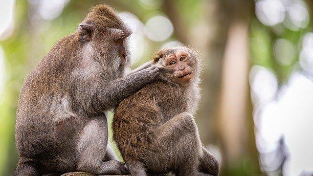 Взаимодействие с другими видами способствует развитию интеллекта животных