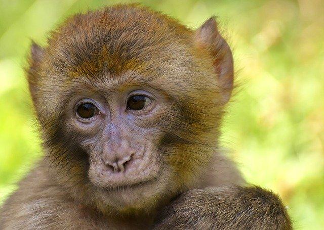 На юге Китая обнаружены древнейшие окаменелости обезьян