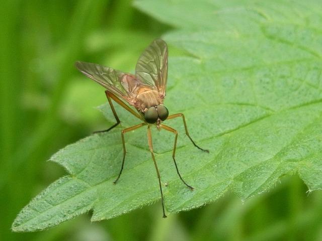 У самок комаров обнаружили уникальные детекторы вкуса крови
