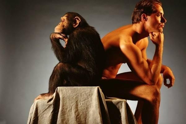 Эксперимент Уинтропа Келлогга по социализации обезьяны
