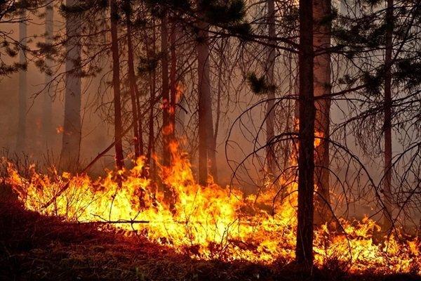 Лесные пожары в России нанесли ущерб в 7 млрд рублей