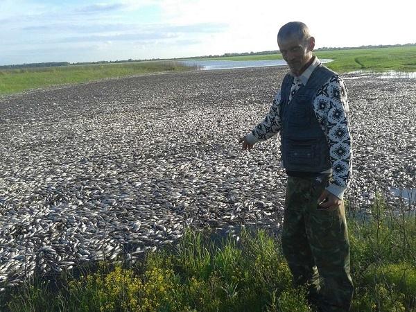 В Астраханской области рыбе не хватило места в реке