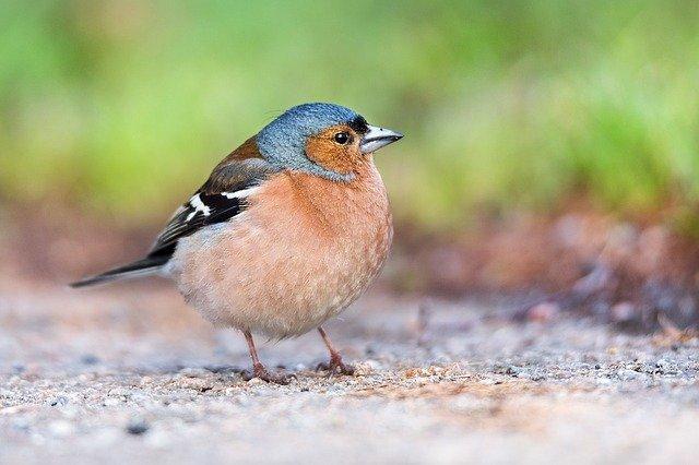 В Северной Америке спасли от вымирания 1,5 миллиарда птиц