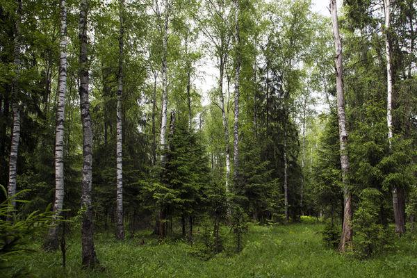 В Волгоградской области на трехнедельный срок продлили запрет на посещение лесов