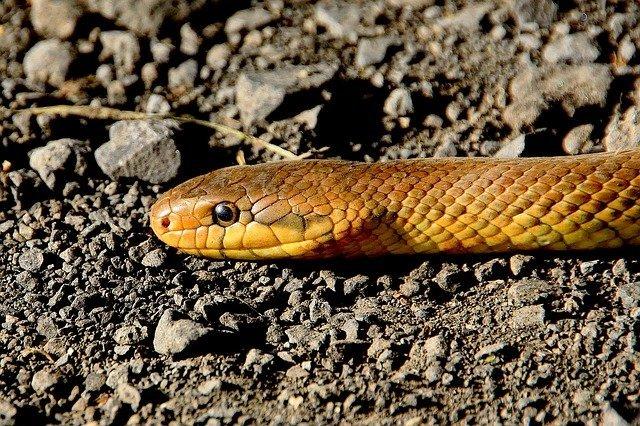 Биологи обнаружили на Филиппинах новый вид роющих змей