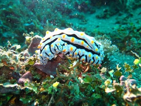 Самые красивые обитатели морских глубин. 3305.jpeg