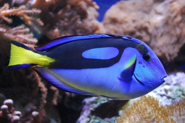 Самые красивые обитатели морских глубин. 3308.jpeg