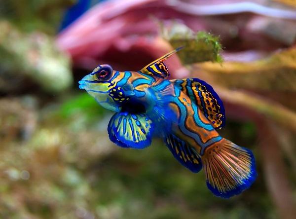 Самые красивые обитатели морских глубин