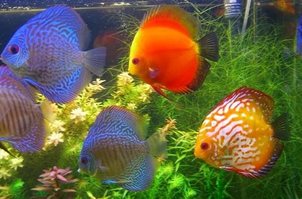 Самые красивые обитатели морских глубин. 3311.jpeg
