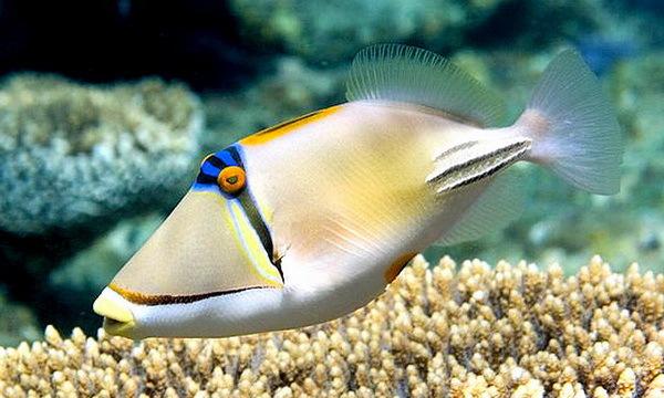 Самые красивые обитатели морских глубин. 3312.jpeg