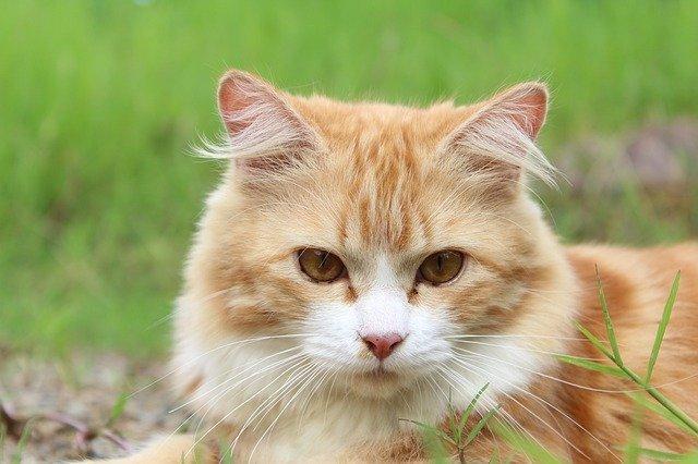 Японские биологи объяснили любовь кошек к кошачьей мяте