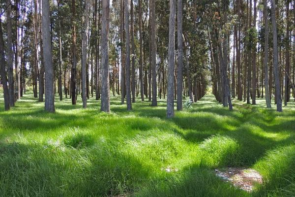 Минприроды ограничило прогулки жителей Саратова в лесных зонах