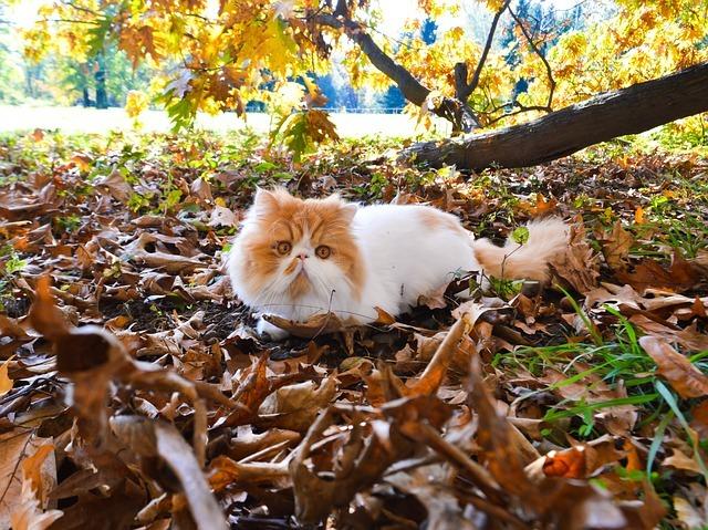 Кошки с приплюснутыми мордами всегда ходят с