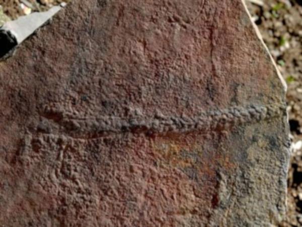 Обнаружен след древнего животного, которое обитало 550 миллионов лет назад