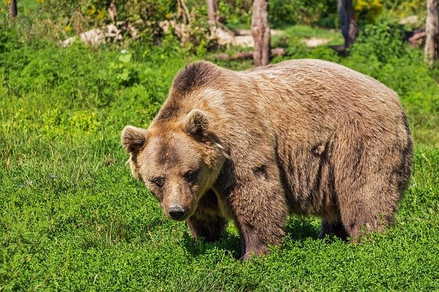 Эксперты объяснили, как вести себя при встрече с медведем