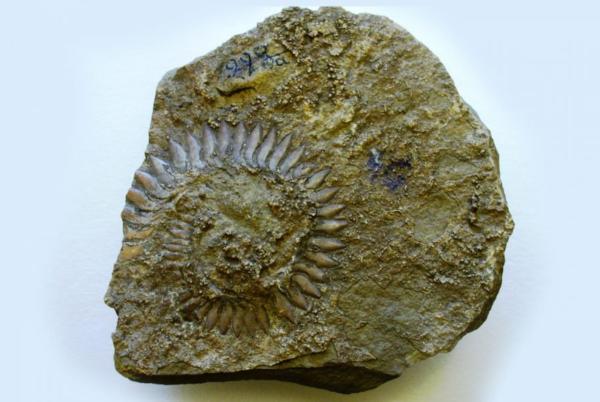 Палеонтологи описали первых подвижных живых существ на планете