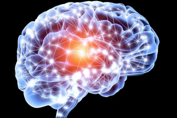 Интересные факты о человеческом мозге