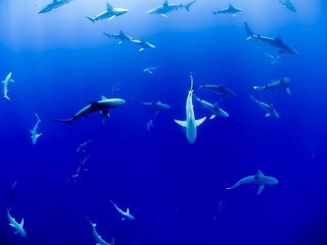 У побережья Новой Зеландии обнаружили светящуюся акулу