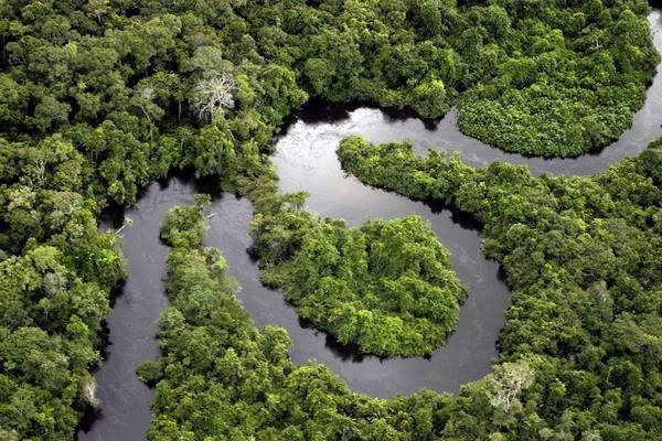 Леса Амазонки не в состоянии идти в ногу с изменением климата