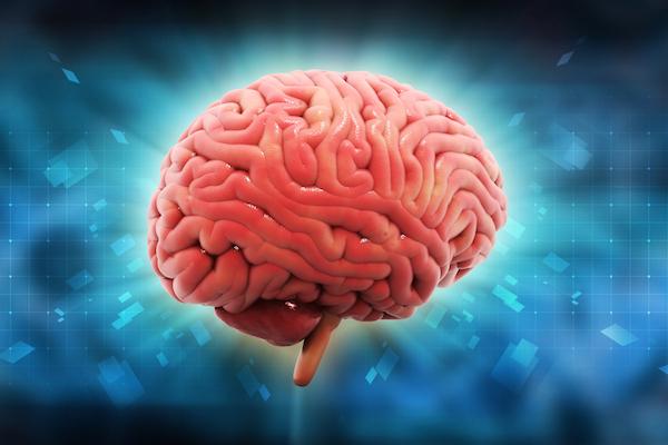 Интересные факты о человеческом мозге (продолжение)