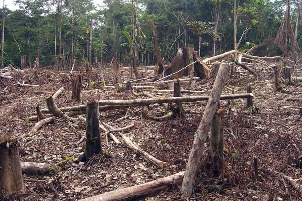 Вырубка лесов: насколько остро стоит проблема обезлесения?