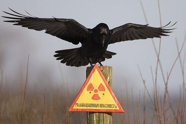 Немного интересных фактов о радиации
