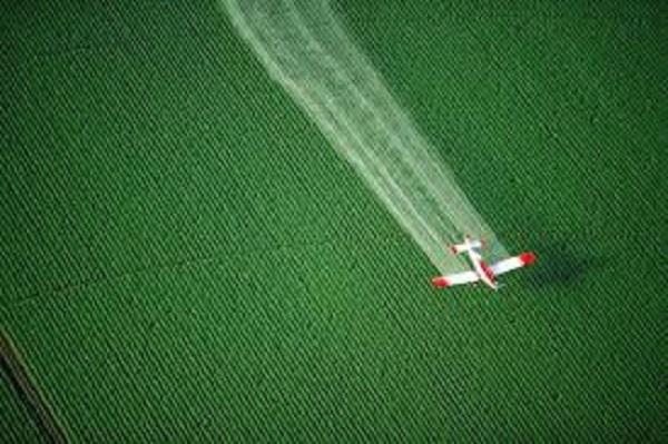 Китайские исследователи рассказали об опасности пестицидов