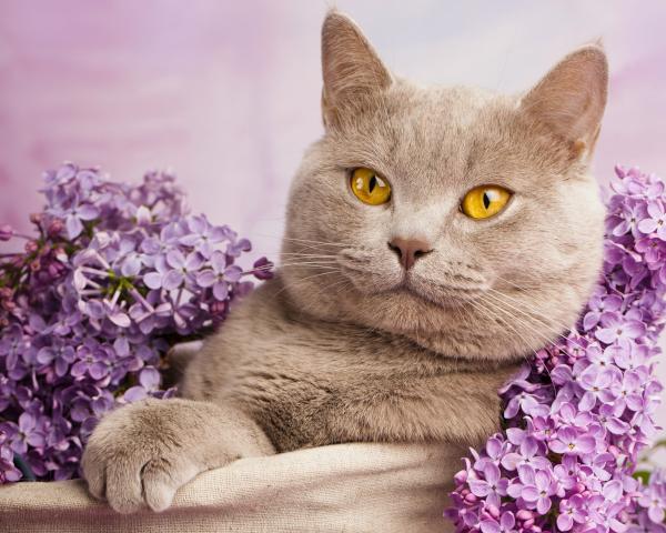 Специалисты рассказали, как сделать домашних кошек счастливыми