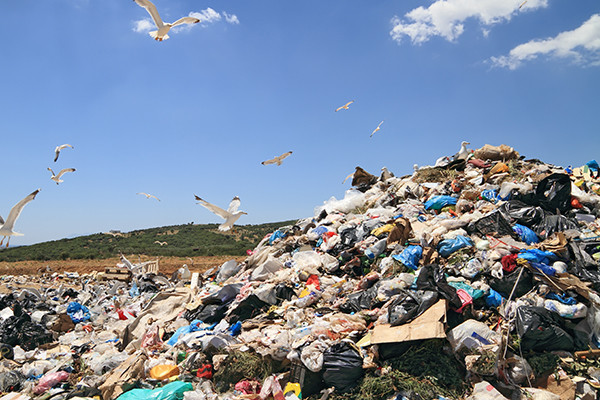 За пять лет количество недовольств россиян экологической обстановкой выросло в три раза