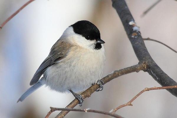 Удивительные способы животных делать запасы на зиму. Птицы