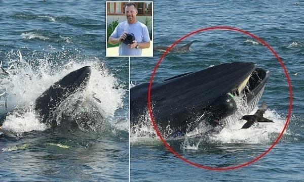 Проглотил, а потом выплюнул: дайвер оказался во рту у огромного кита