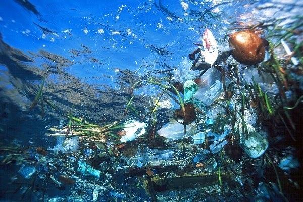 Пластиковые отходы пагубно влияют на бактерии в Мировом океане, не позволяя им вырабатывать кислород