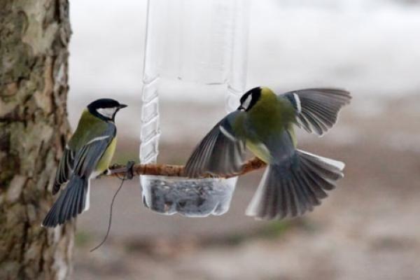 Пять советов для зимнего наблюдения за птицами