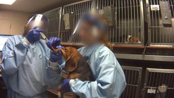 Чудовищные опыты над животными вызвали массовые протесты по всей стране