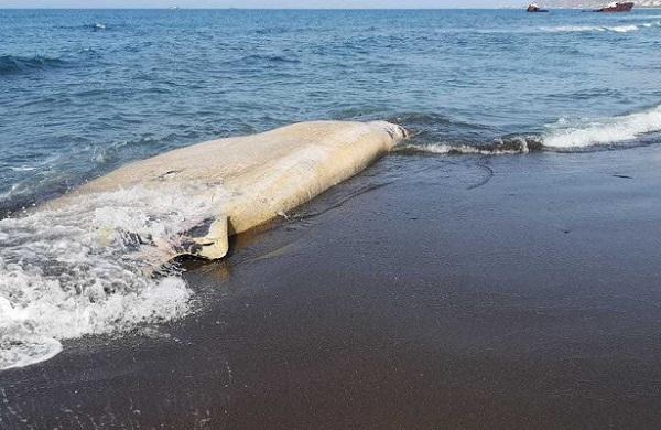 Морское животное озадачило зоологов
