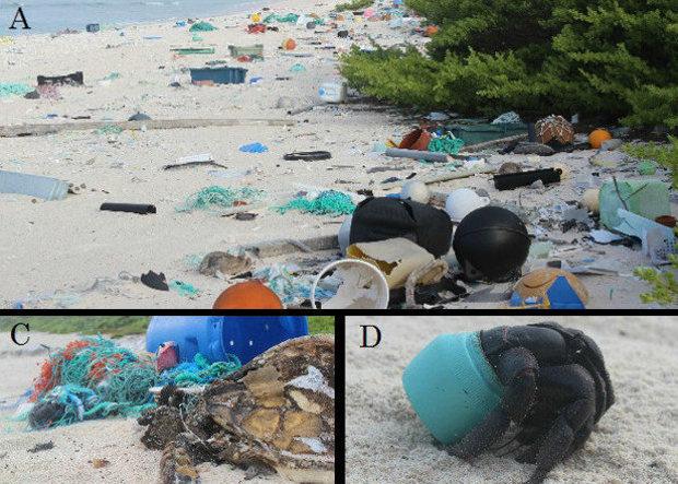 Остров Хендерсона - необитаемый остров пластикового мусора