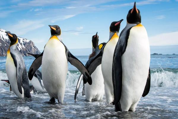 В Новой Зеландии обнаружили кости гигантского пингвина