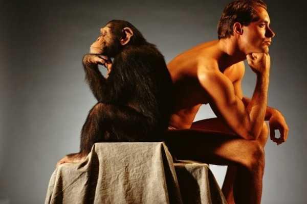 Речь обезьян имеет более сложную структуру, чем считали ранее
