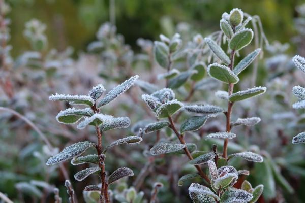 Приморье ждут заморозки на этой неделе