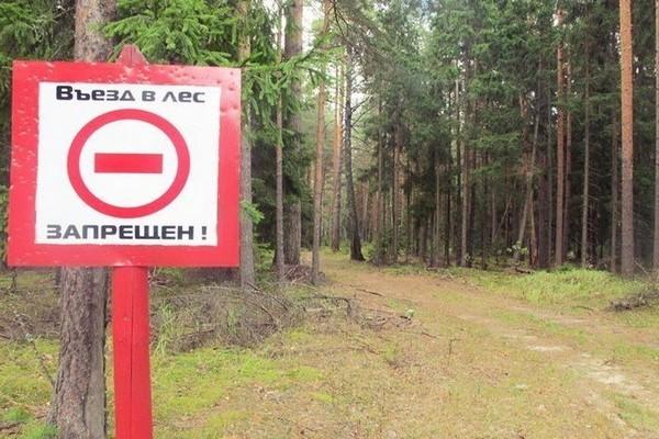 Власти Тамбовской области ограничили посещение лесов из-за пожаров