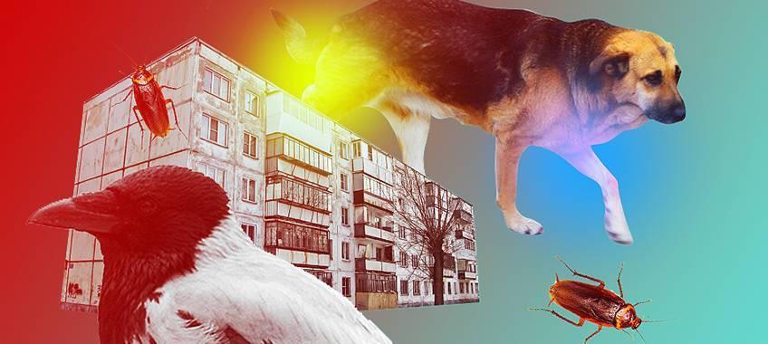Городские улицы делают животных опаснее и умнее